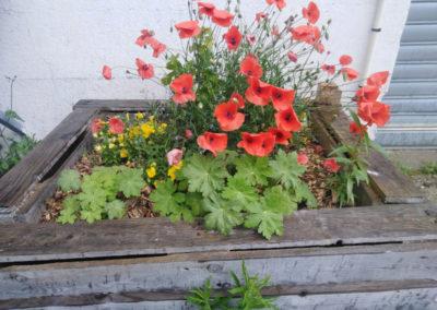 Jardin des cultures - Bac fleuri