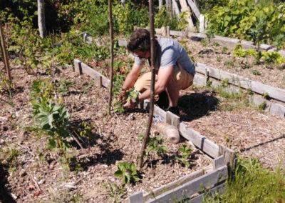 Jardin des cultures - Pierre plante les piquets